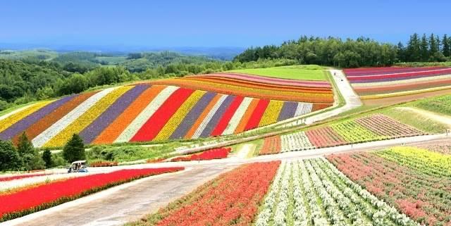 北海道富良野の花畑イメージ画像